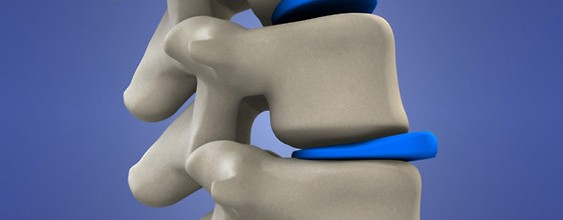 coloana vertebrala